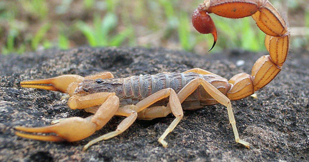 Adivinos y Hechizos para Escorpion